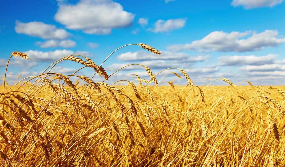 农业农村部关于成立村集体经济组织 制定集体经济组织财务报告 规范村集体管理机制建议的答复