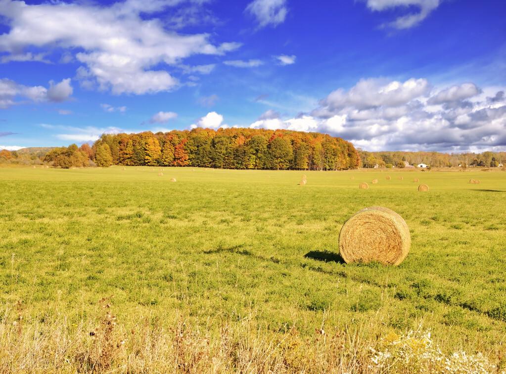 农用地转为建设用地如何审批?