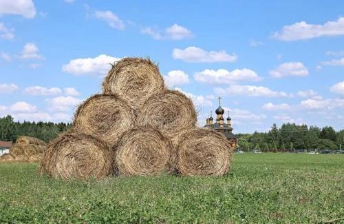 农业农村部:不得批准城市居民占用农民集体土地建住宅